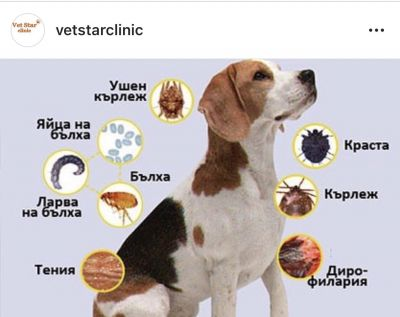 паразити - VET STAR CLINIC - София, Люлин